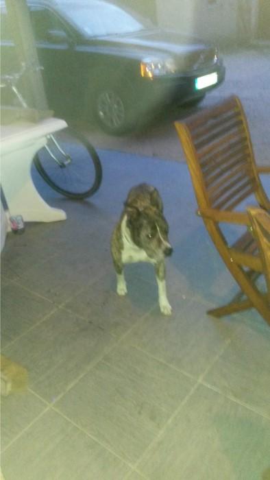 chien 1508152