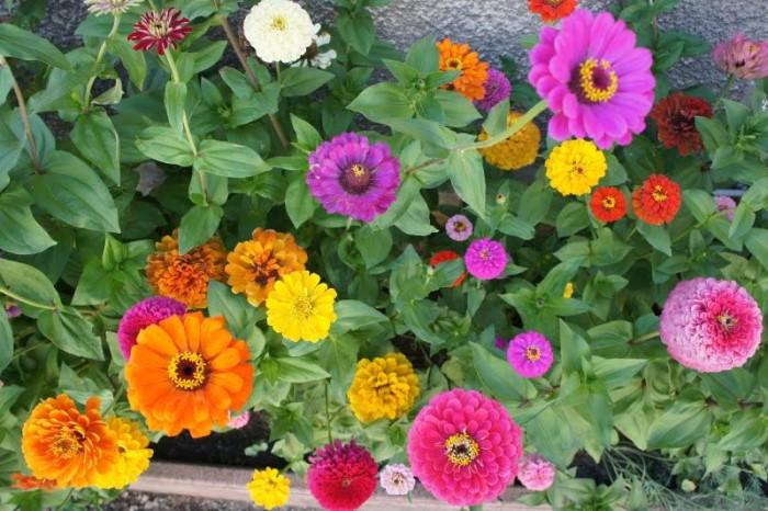 fleurs 0408152