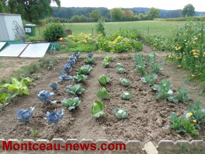 jardin 12081513