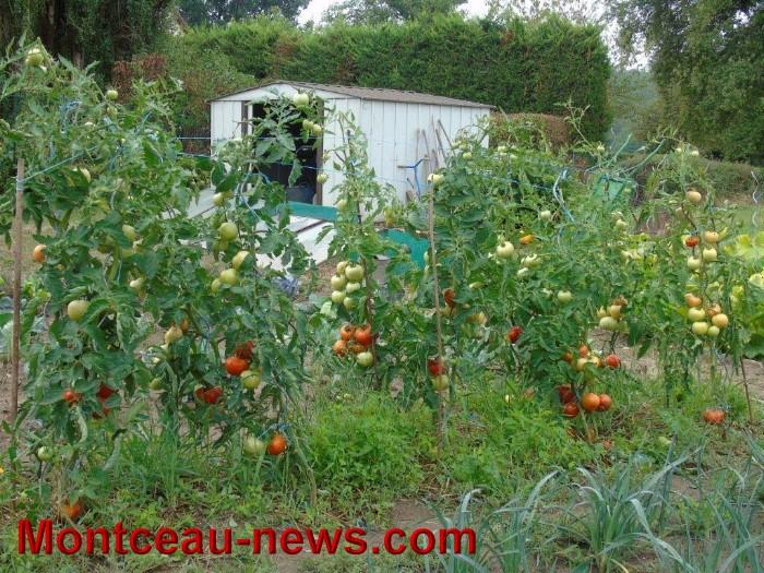 jardin 12081514