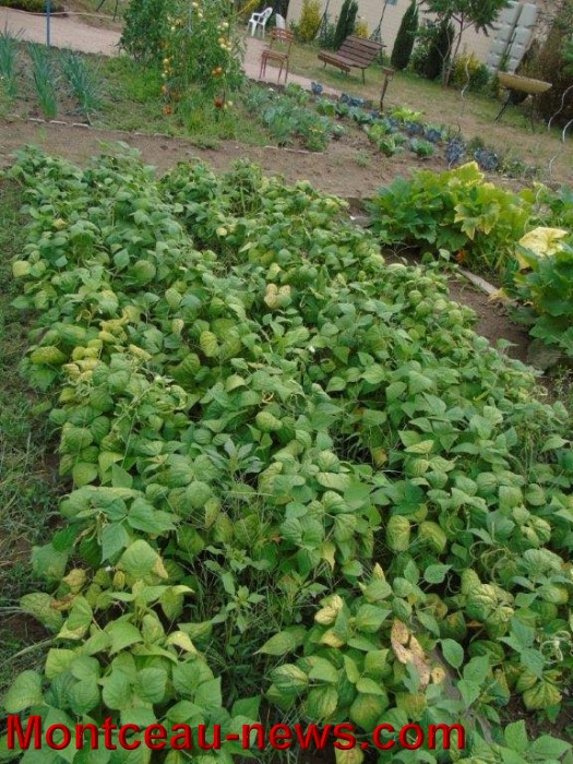 jardin 12081518