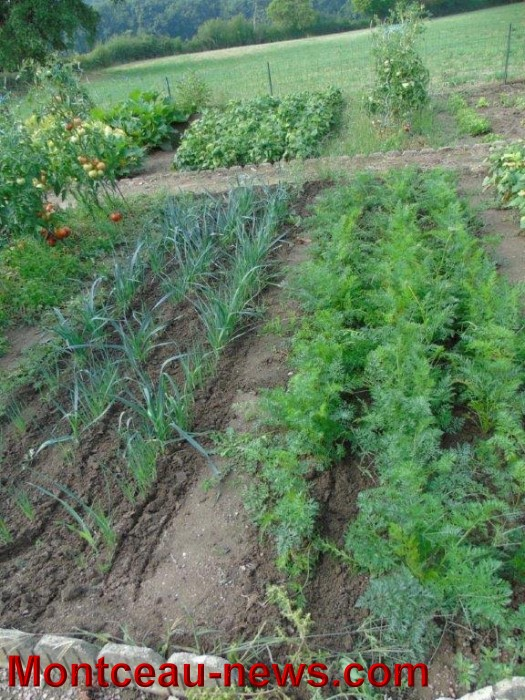 jardin 1208156