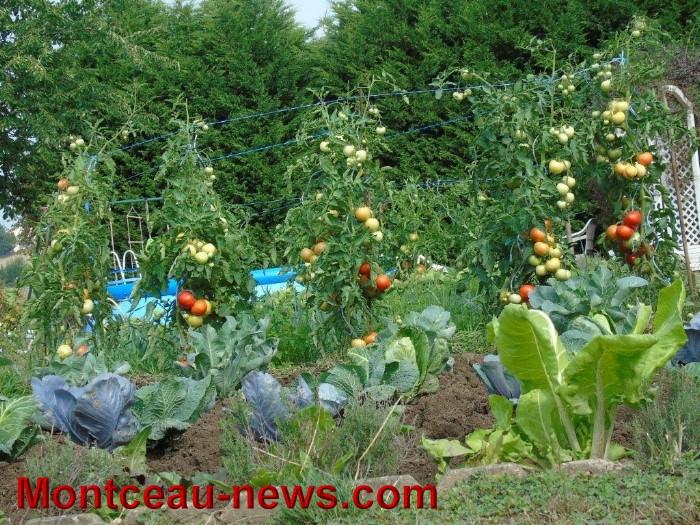 jardin 1208157