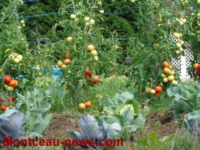 jardin 1208159