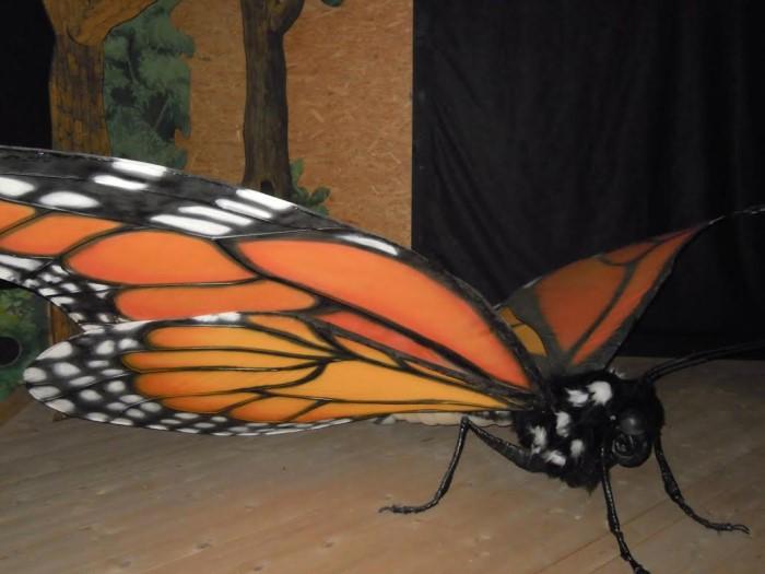 papillon ne 06081520