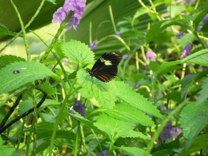 papillon ne 06081522