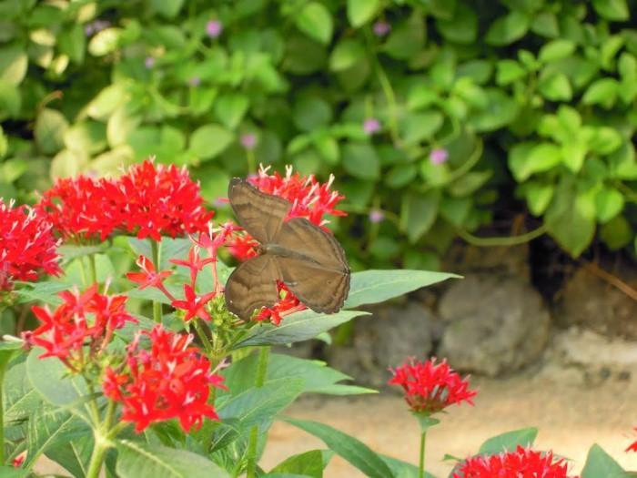 papillon ne 06081525