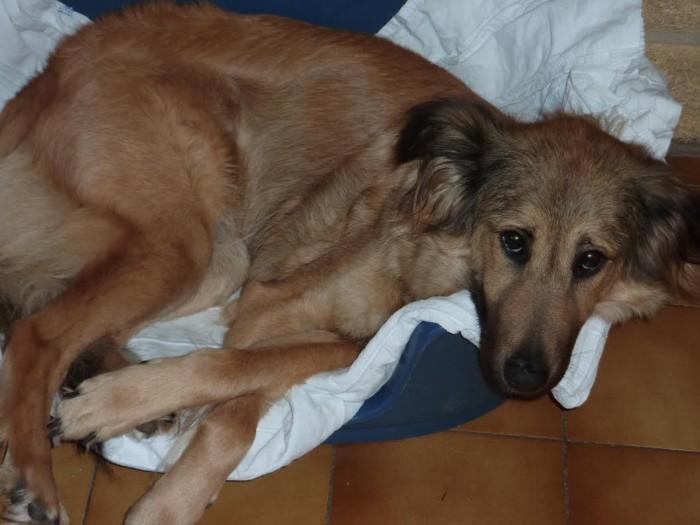 chien perdu 2709152