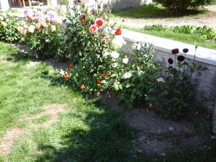 fleurs 08091510