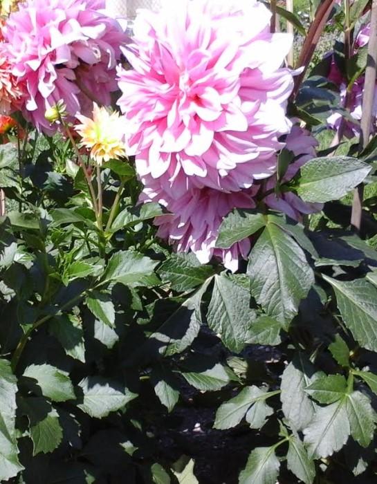 fleurs 0809153