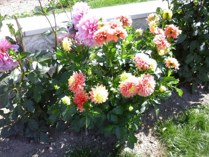 fleurs 0809156