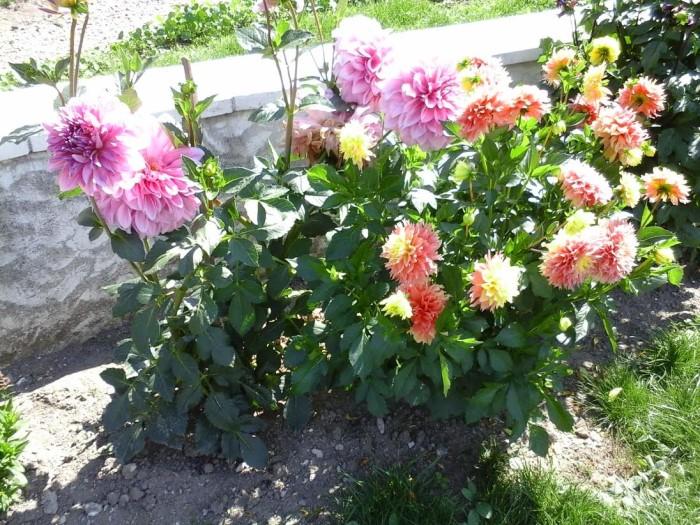 fleurs 0809157