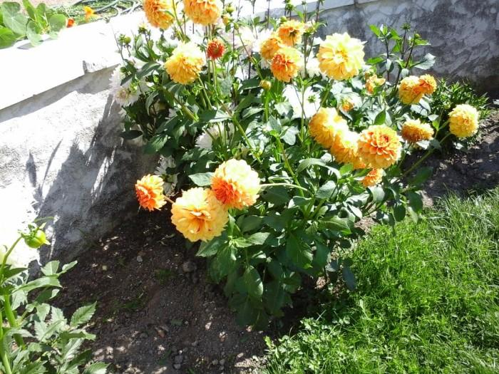 fleurs 0809158
