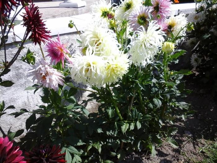fleurs 0809159