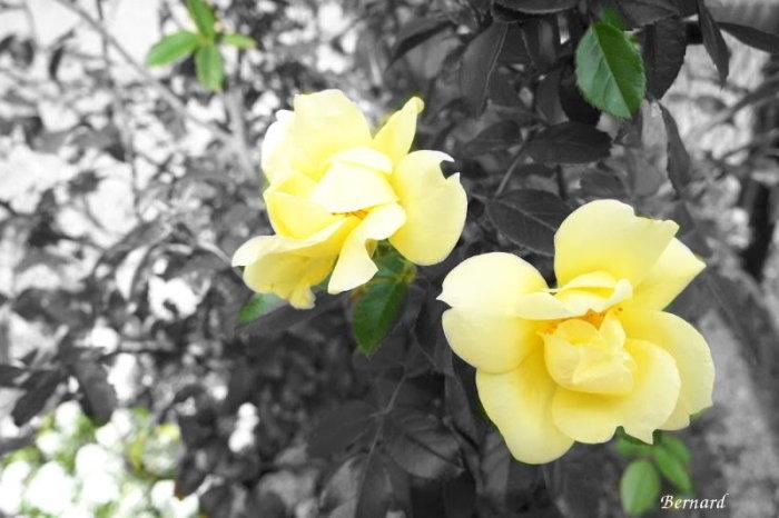 fleurs 2309152