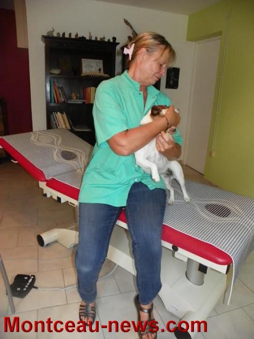 osteo chien 0909156