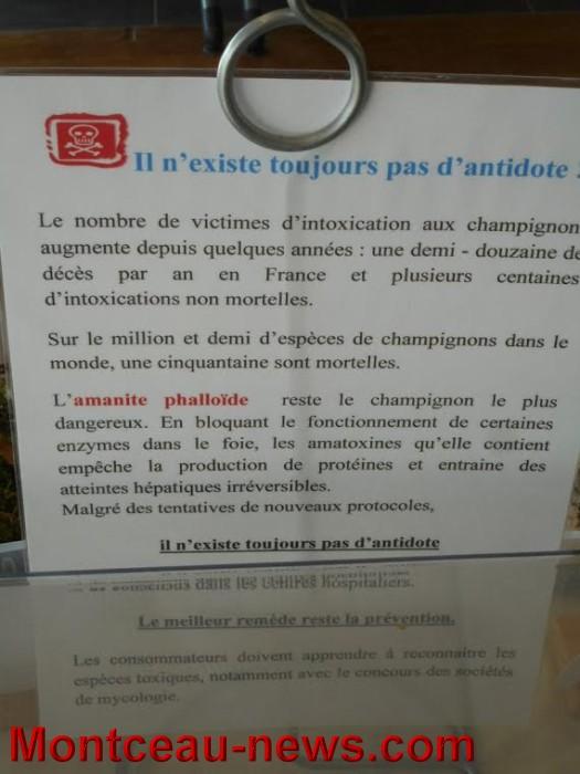 champi 1010156