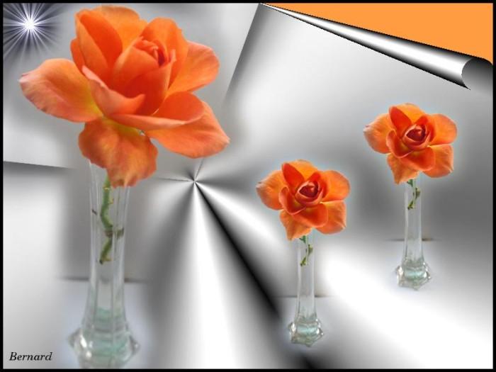fleurs 2510152
