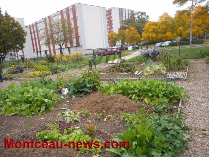 jardin 15101510