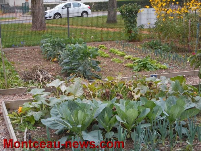 jardin 15101511