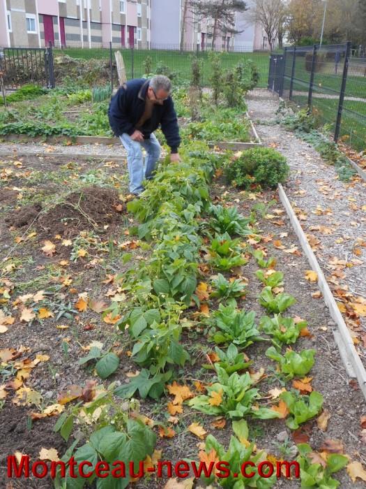 jardin 15101512