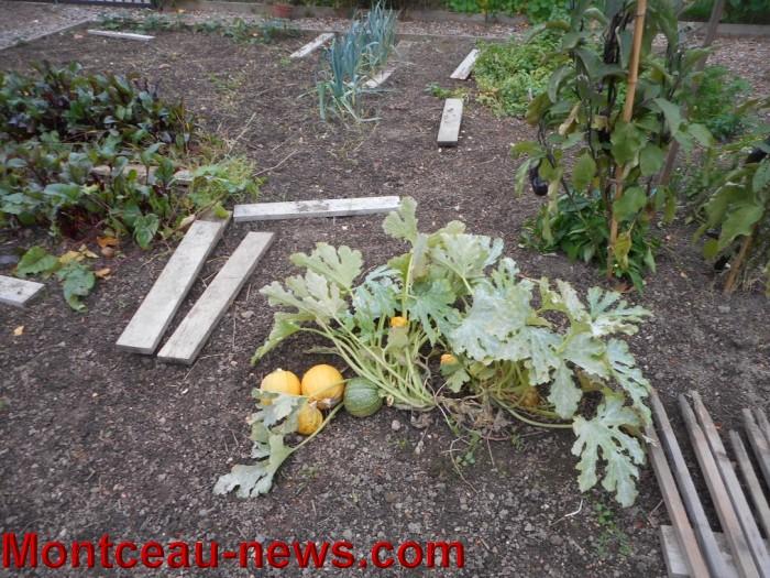 jardin 15101515