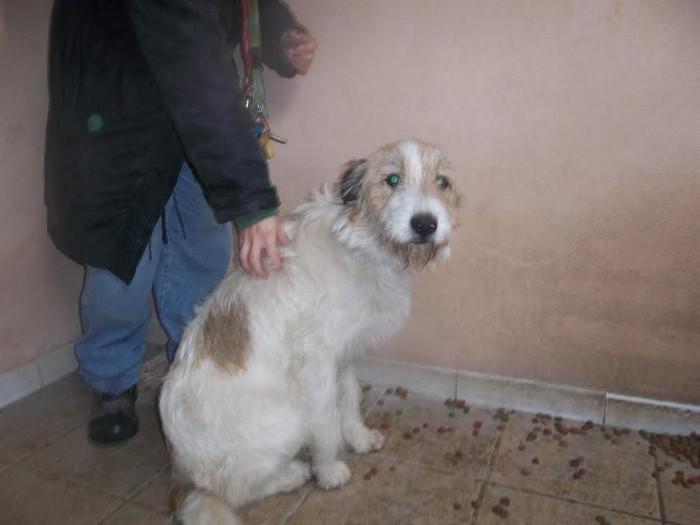spa chien 2510152
