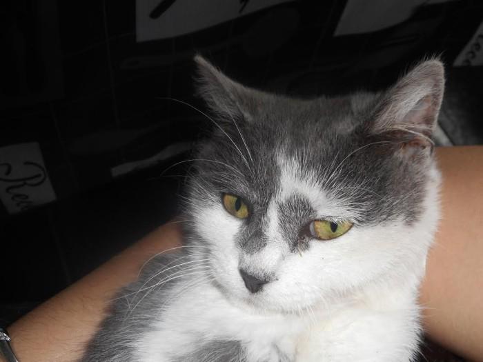 chat perdu 2411152