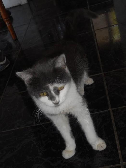 chat perdu 2411153