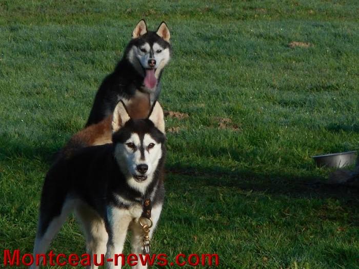 chien bizots 09111510