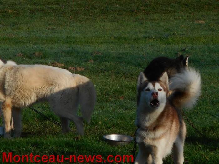 chien bizots 09111511