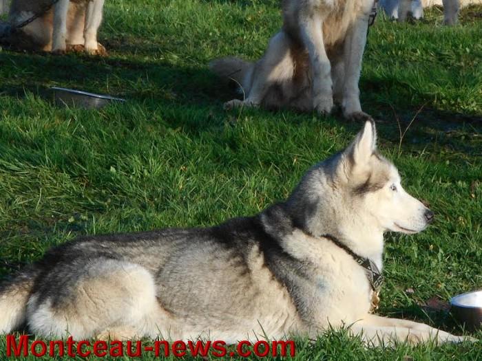 chien bizots 09111512