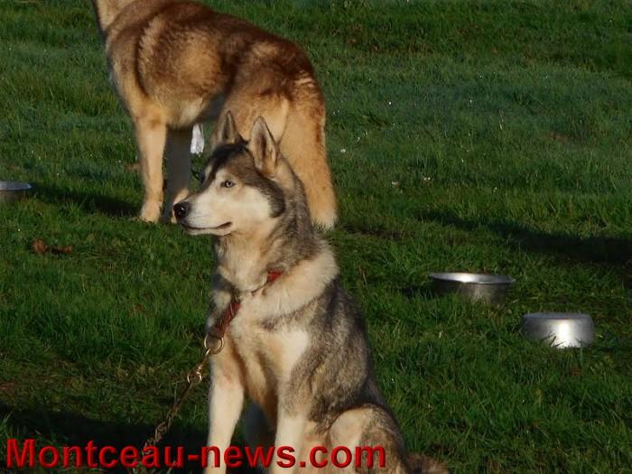 chien bizots 09111513