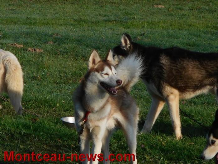 chien bizots 09111514