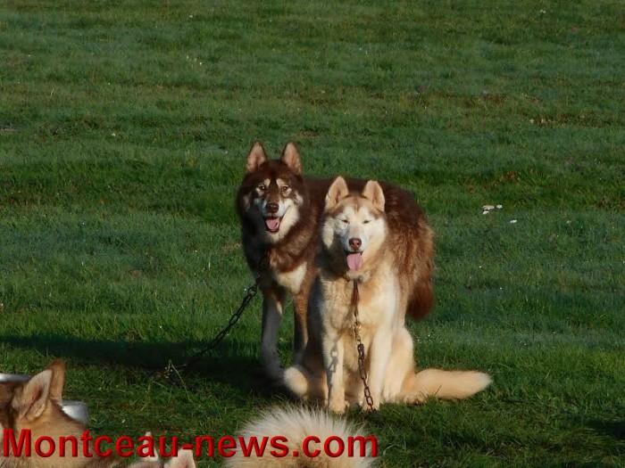 chien bizots 09111516