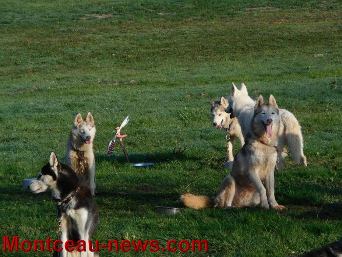 chien bizots 09111519