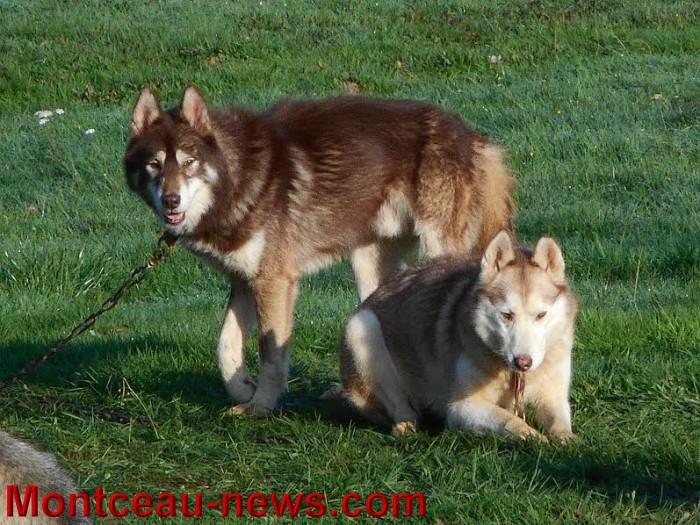 chien bizots 09111520