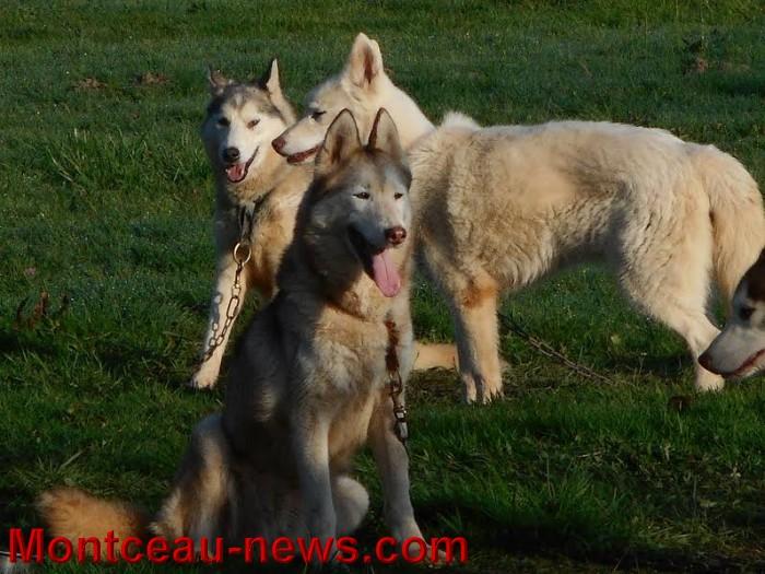 chien bizots 09111521