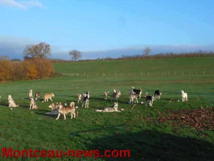 chien bizots 0911158