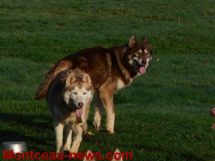 chien bizots 0911159