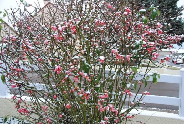 fleurs 1601165