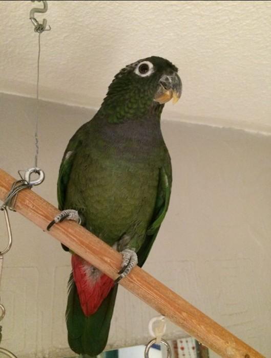 oiseaux 2301162