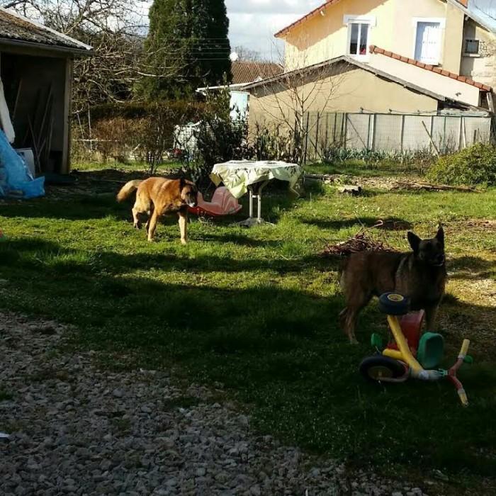 chien spa 1103162