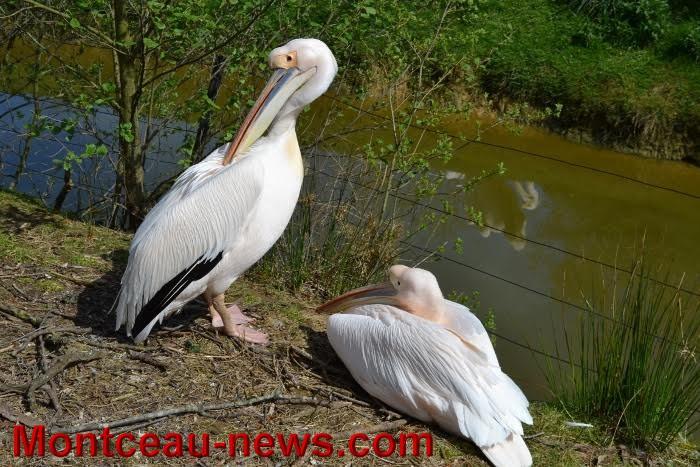 parc oiseaux 25041616
