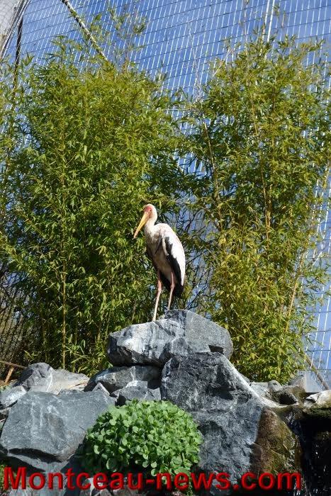 parc oiseaux 2504162