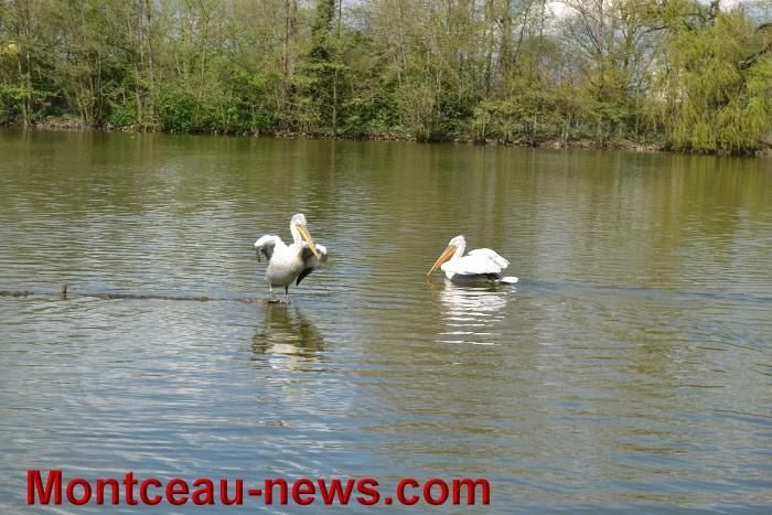 parc oiseaux 25041629