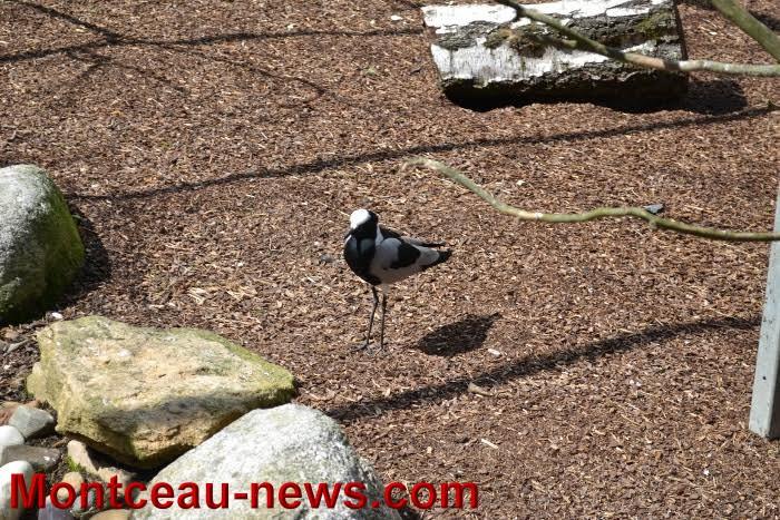 parc oiseaux 2504163