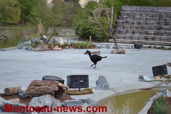parc oiseaux 25041632