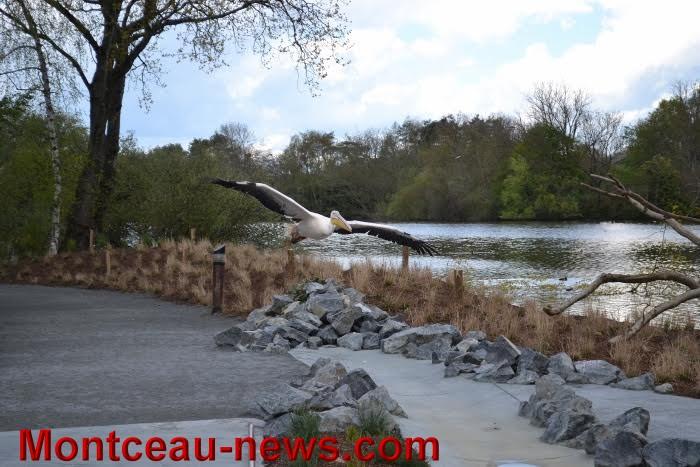parc oiseaux 25041633