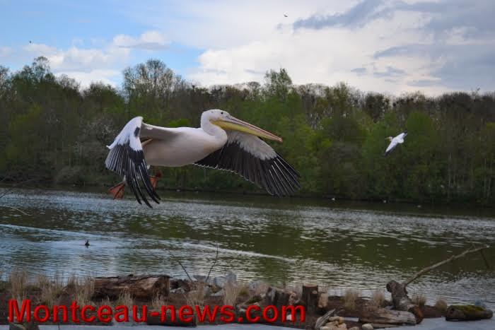 parc oiseaux 25041635